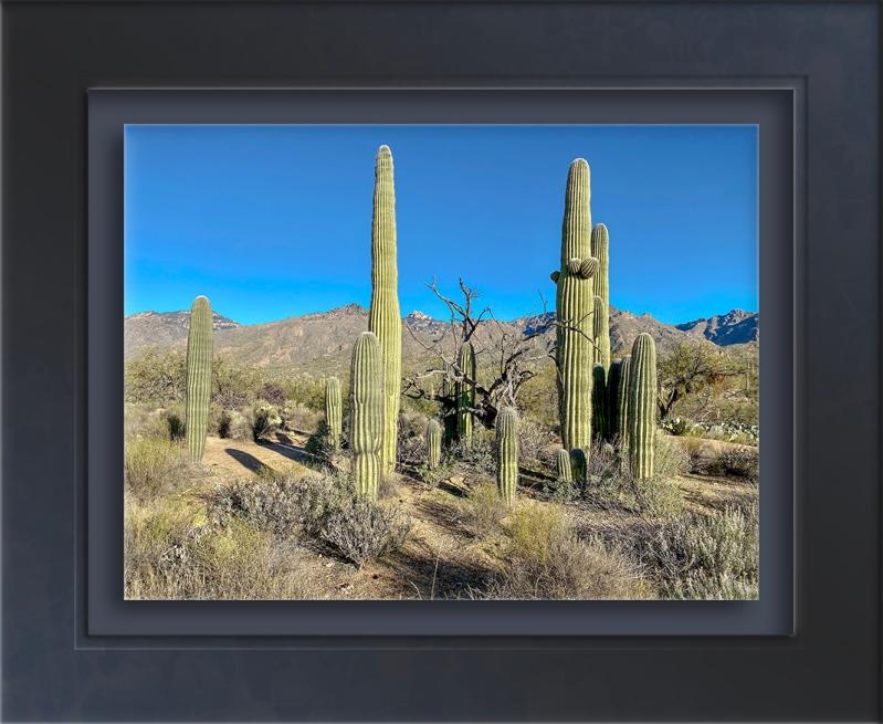 Saguaro Family-72.jpg