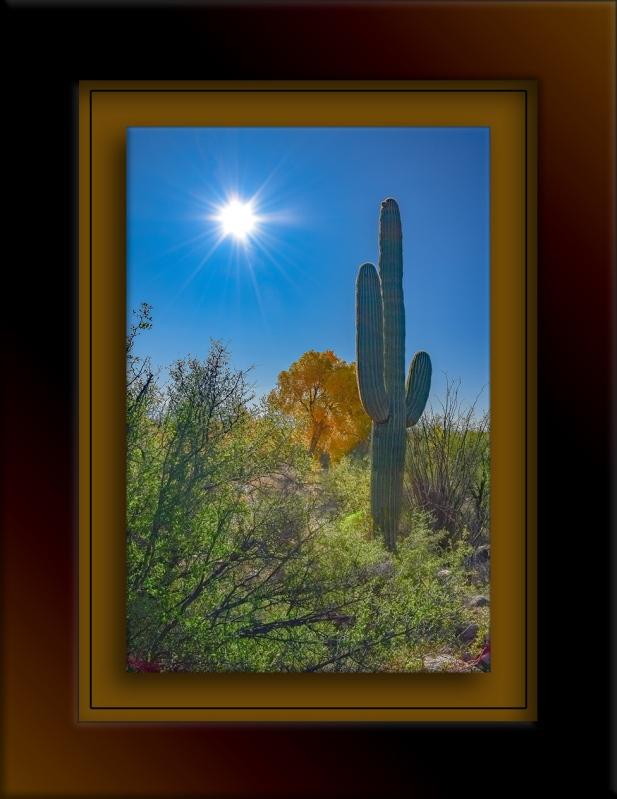Saguaro In Sun-72.jpg