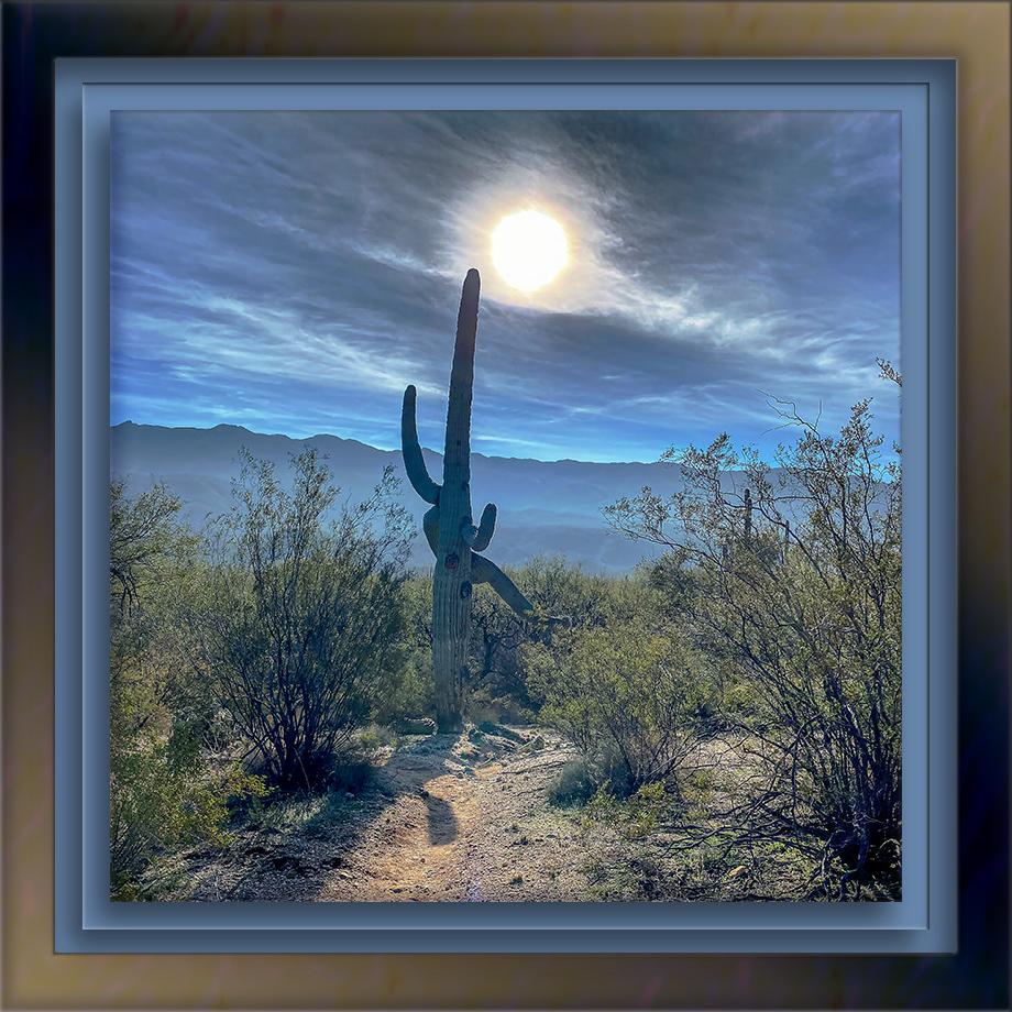 Saguaro Nat. Park-72-2