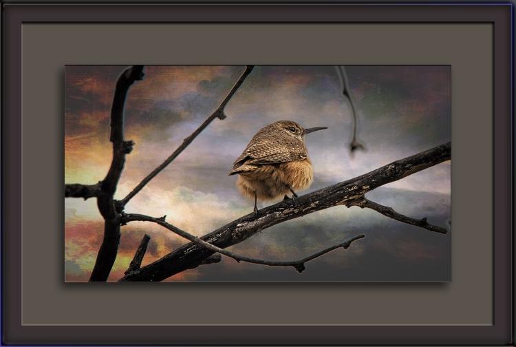 winter-wren-0294-art-blog