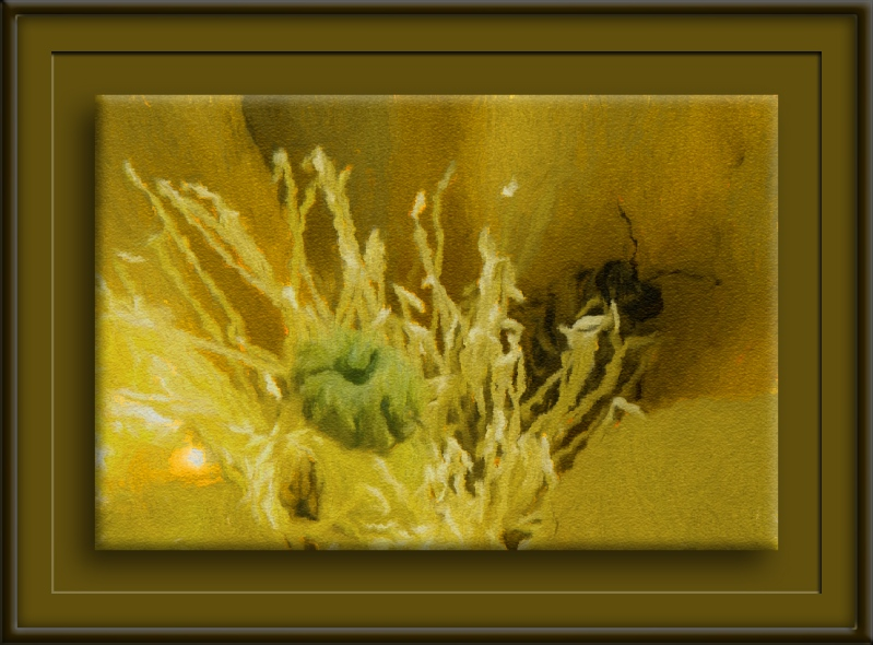 Bee & Cactus Flower (1 of 1)-art-72