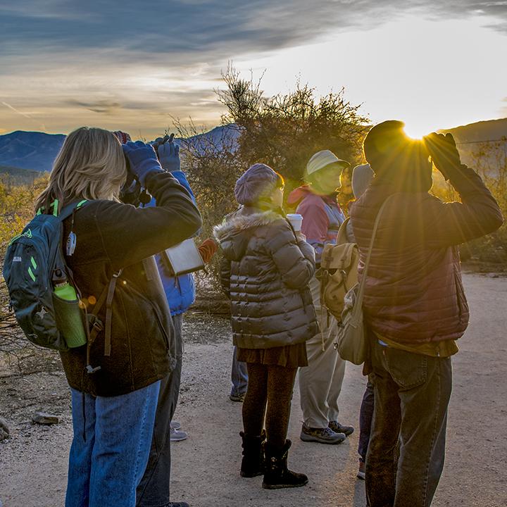 Bird Walk In Sabino Canyon