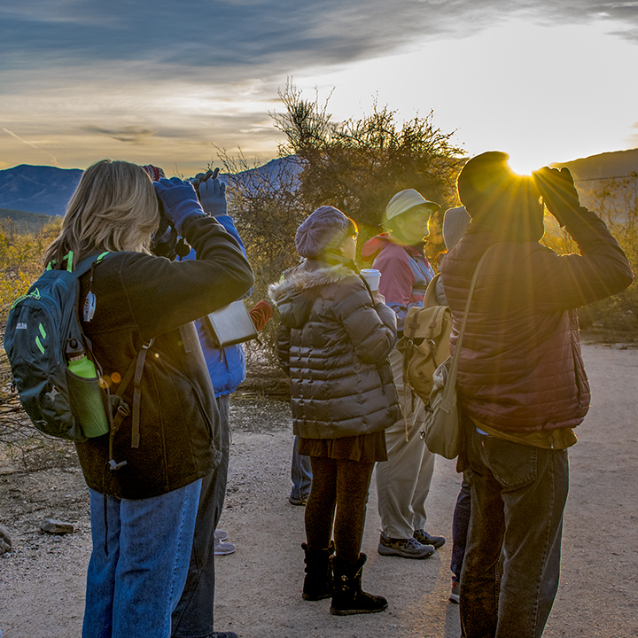 Bird Walk In Sabino Canyon