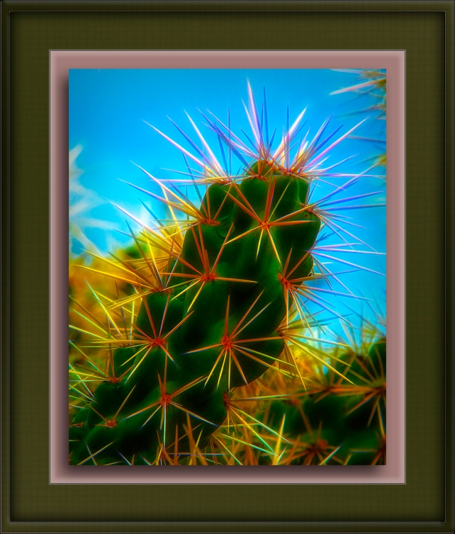 Cholla (1 of 1)-Edit-1-art-72