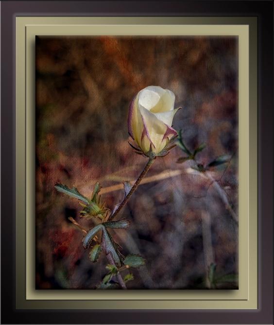 Hibiscus-0670-art-72