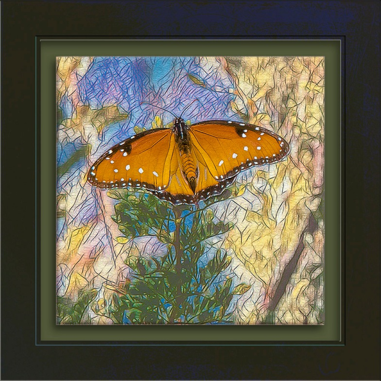 Queen Butterfly-1065-2-art-2-72