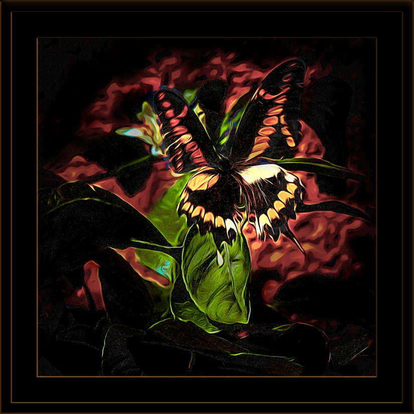 Swallowtail Butterfly-art-Edit-1-72