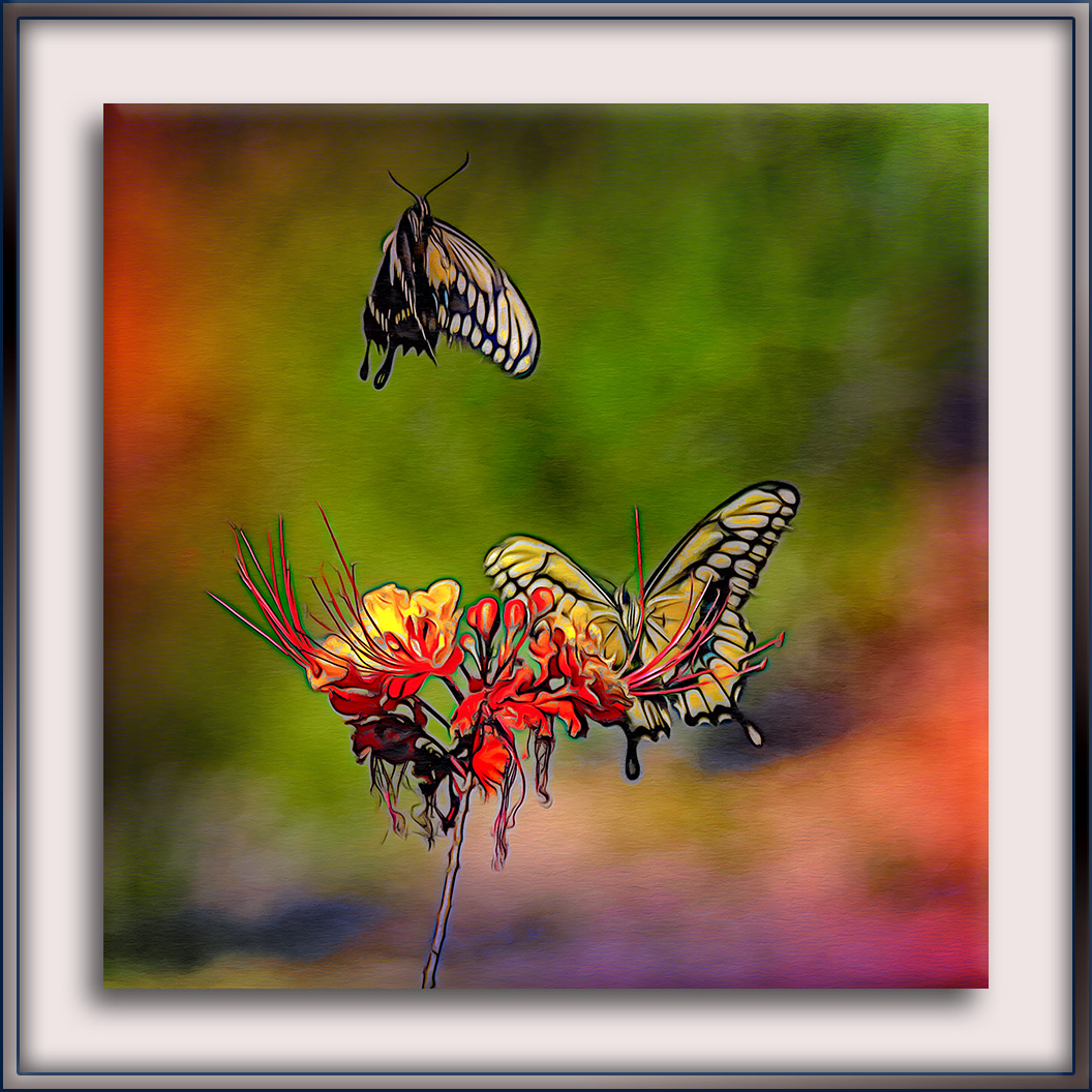 Two-Tailed Swallowtail Butterflies (6 of 6)-2-art-2-72
