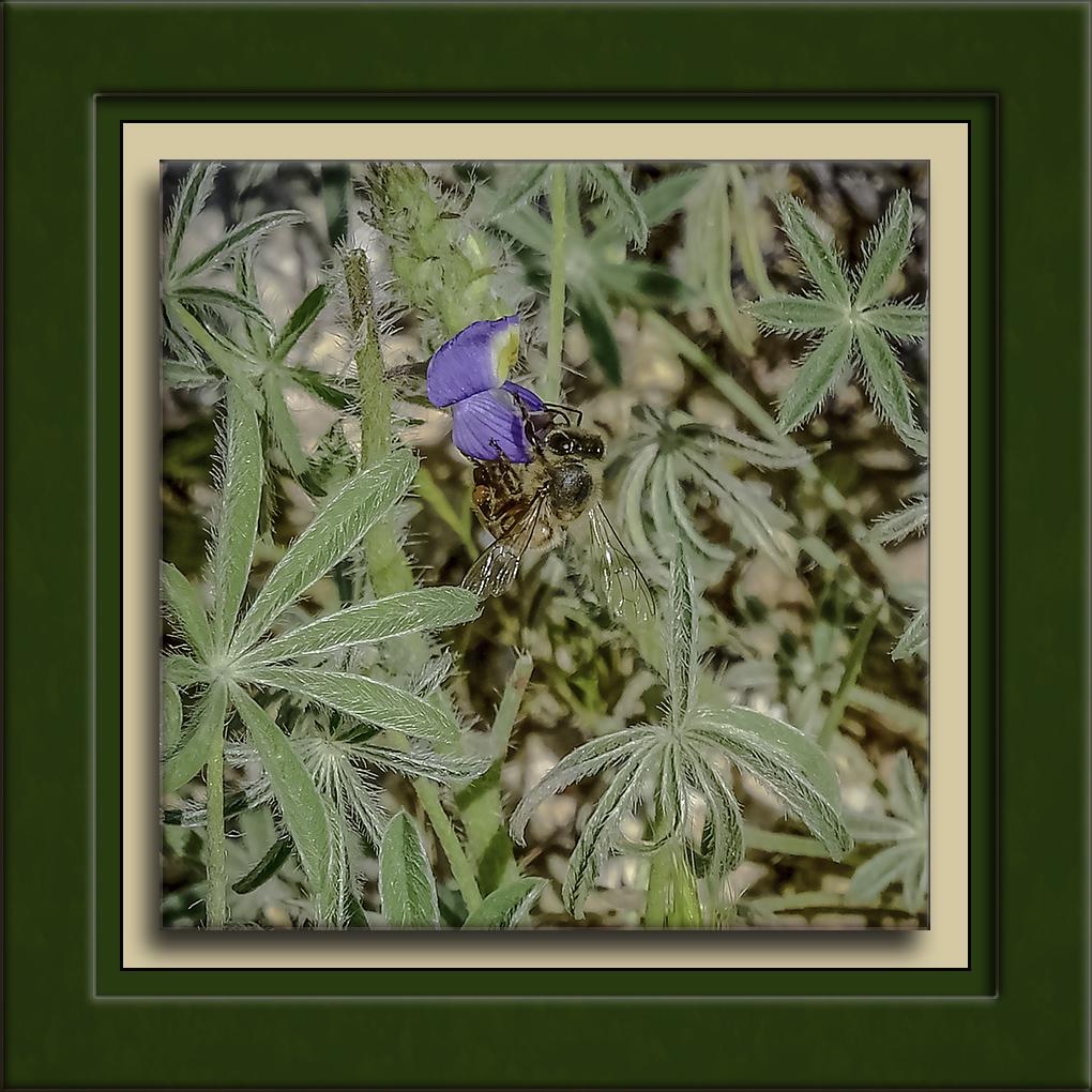 Bee On Lipon-DSC_4407-72