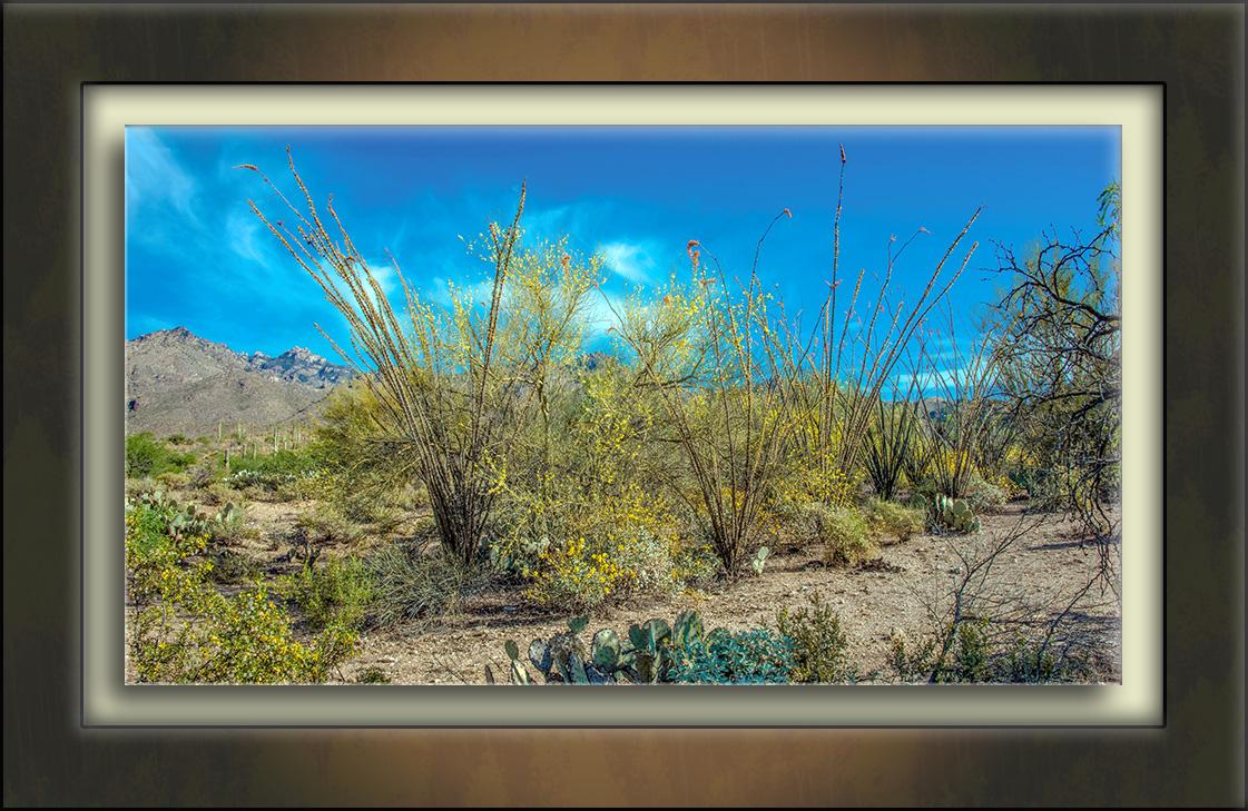 Blooming Sabino Canyon (1 of 1)-72