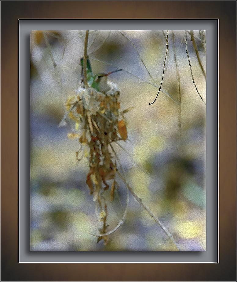 Hummingbird On Nest-Edit-3-art-72-2