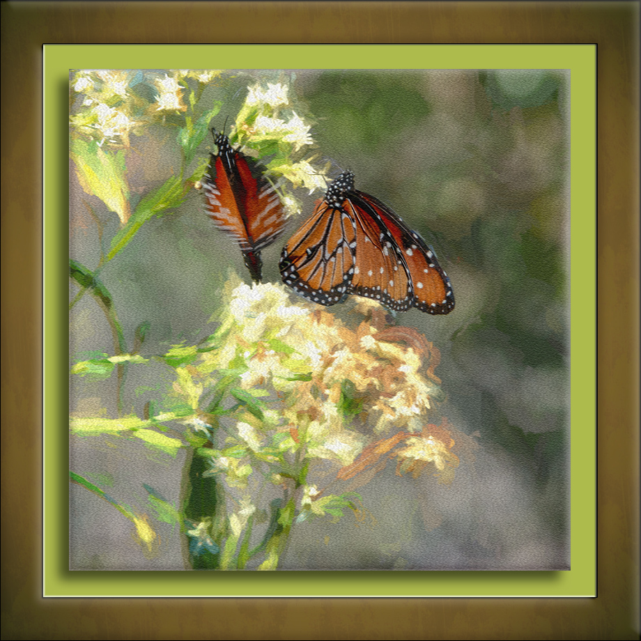 Queen Butterflies-art-72