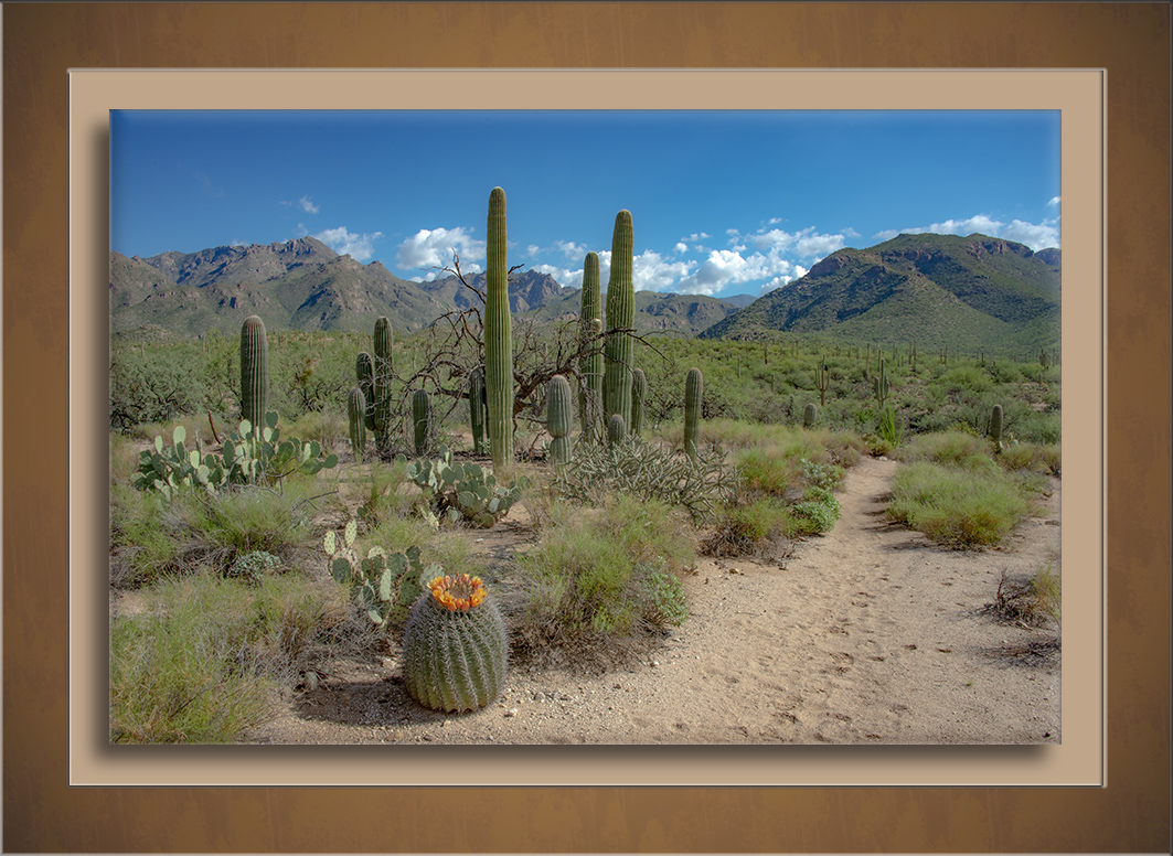 Sabino Canyon-3503-72