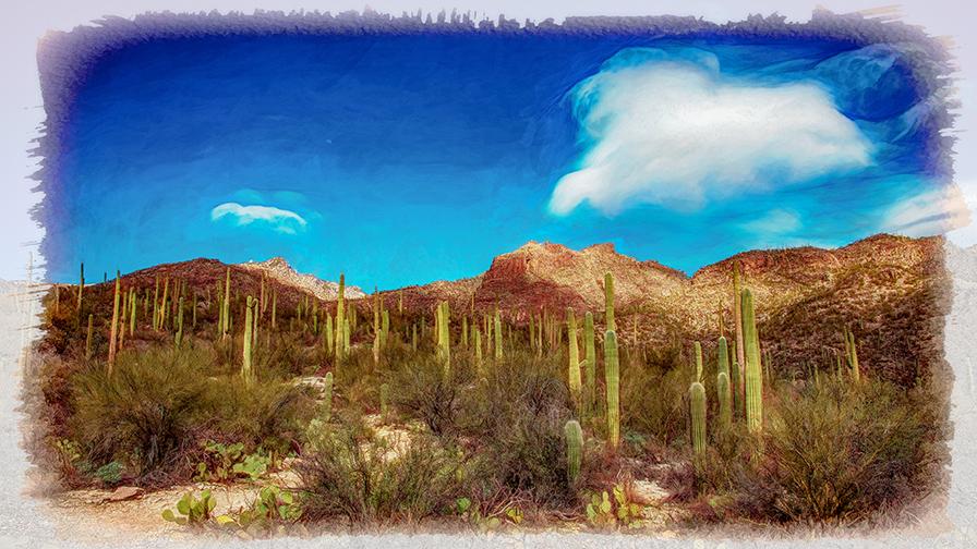 Saguaro Cactus-9657-art-72