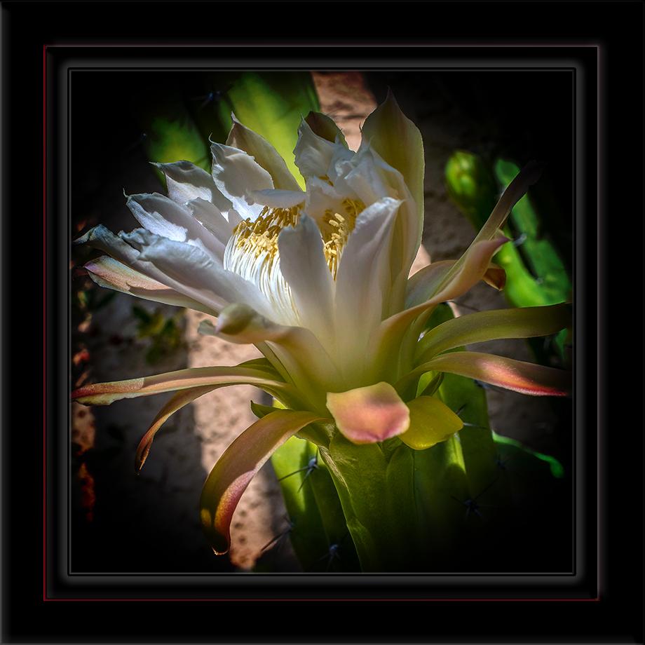 Cactus Flower-72-2