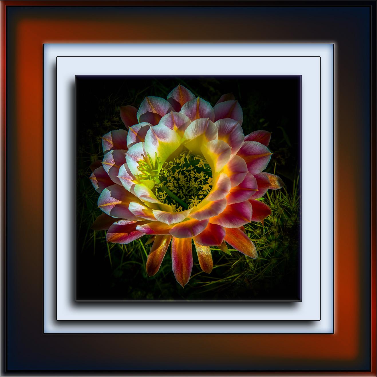Cactus Flower Art.72