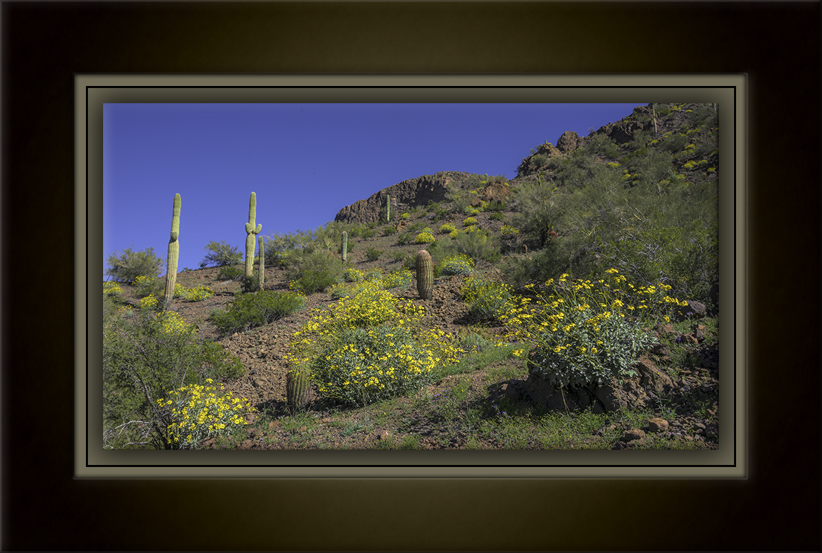 picacho peak-6083-Edit-1-72