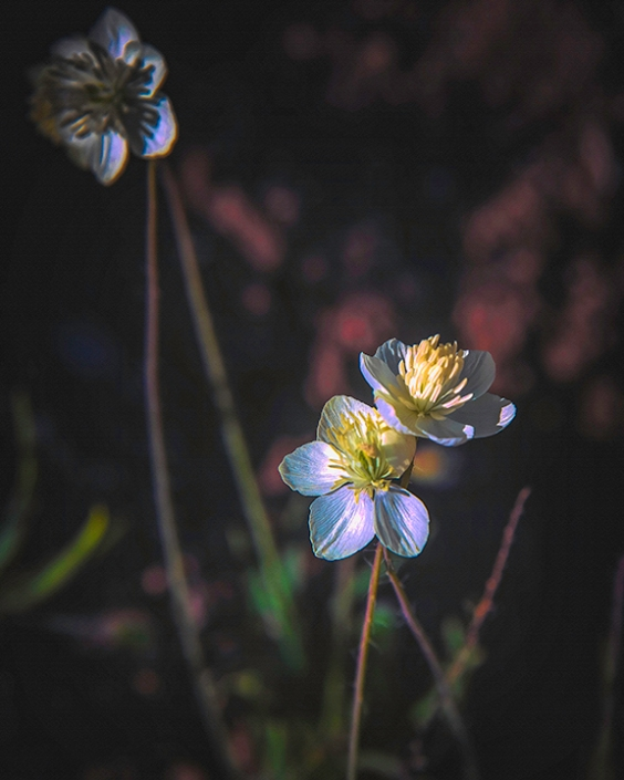 Wildflowers (1 of 1)-5 Darkness My Old Friend-Edit-art-72