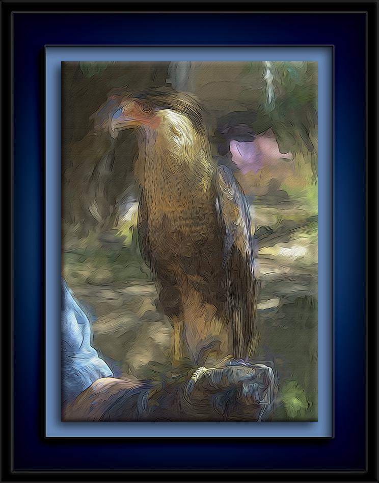 Crested Caracara-Art-72