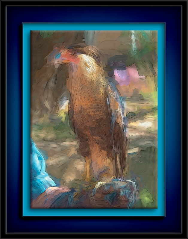 Crested Caracara-Art-72