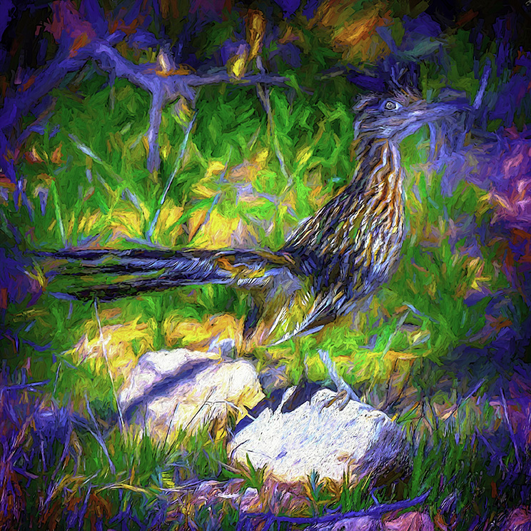 Greater Roadrunner-Edit-1-art-Edit-1-72