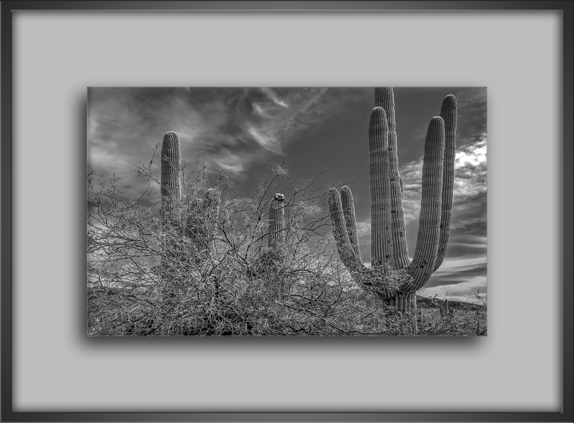 Saguaro Cactus-B&W-72