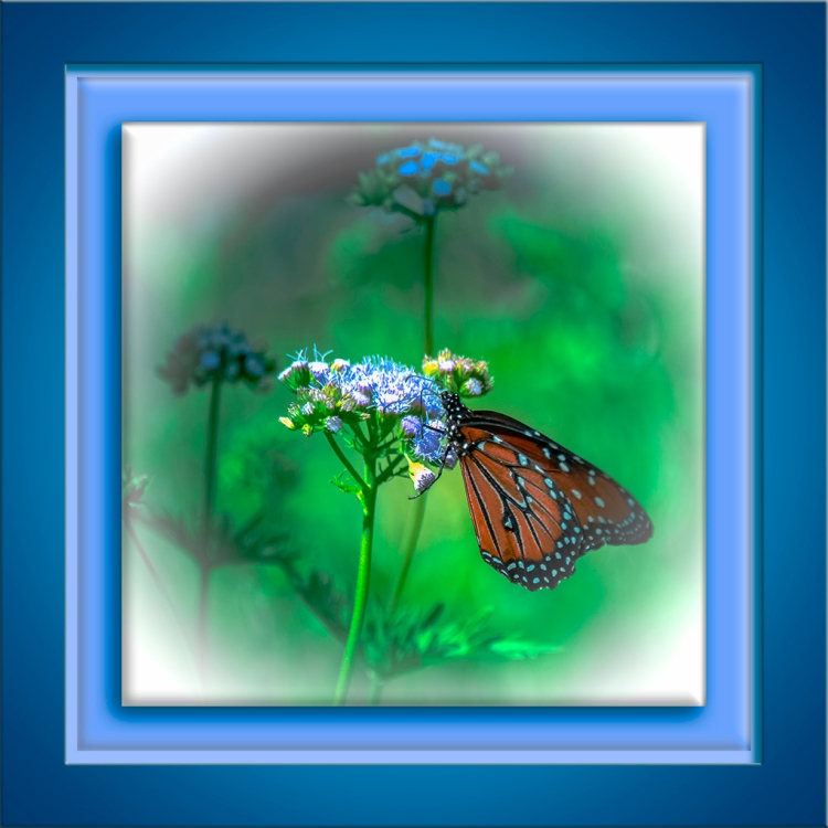 Monarch Butterfly-Edit-1-art-72