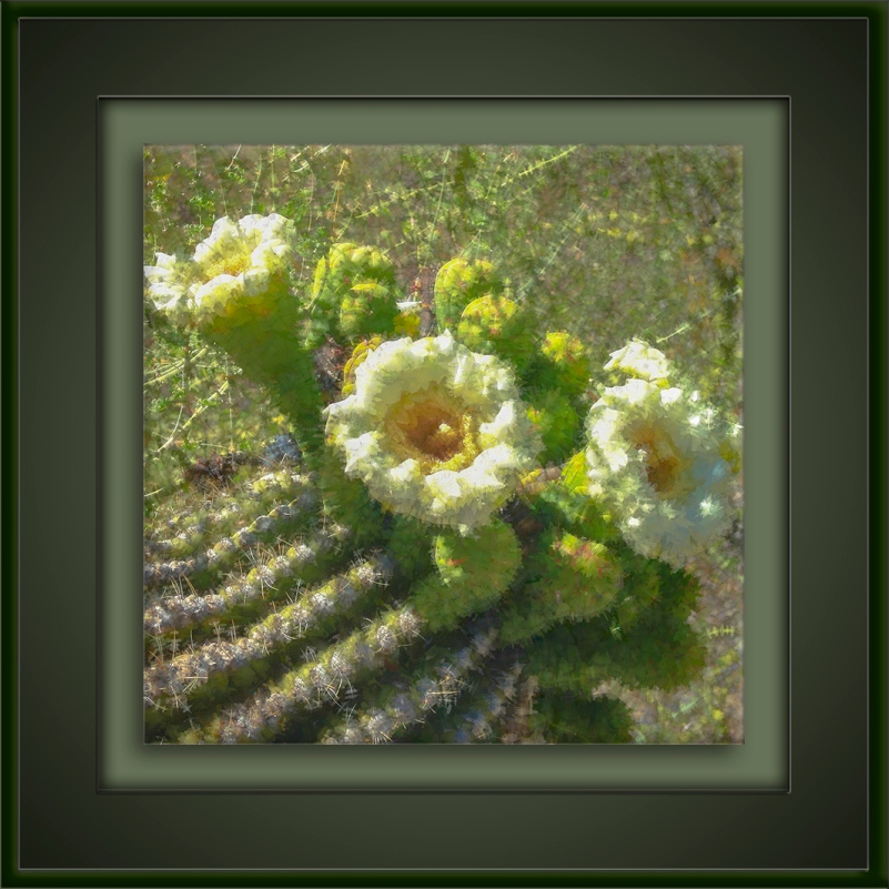 Saguaro Blossoms-art-72