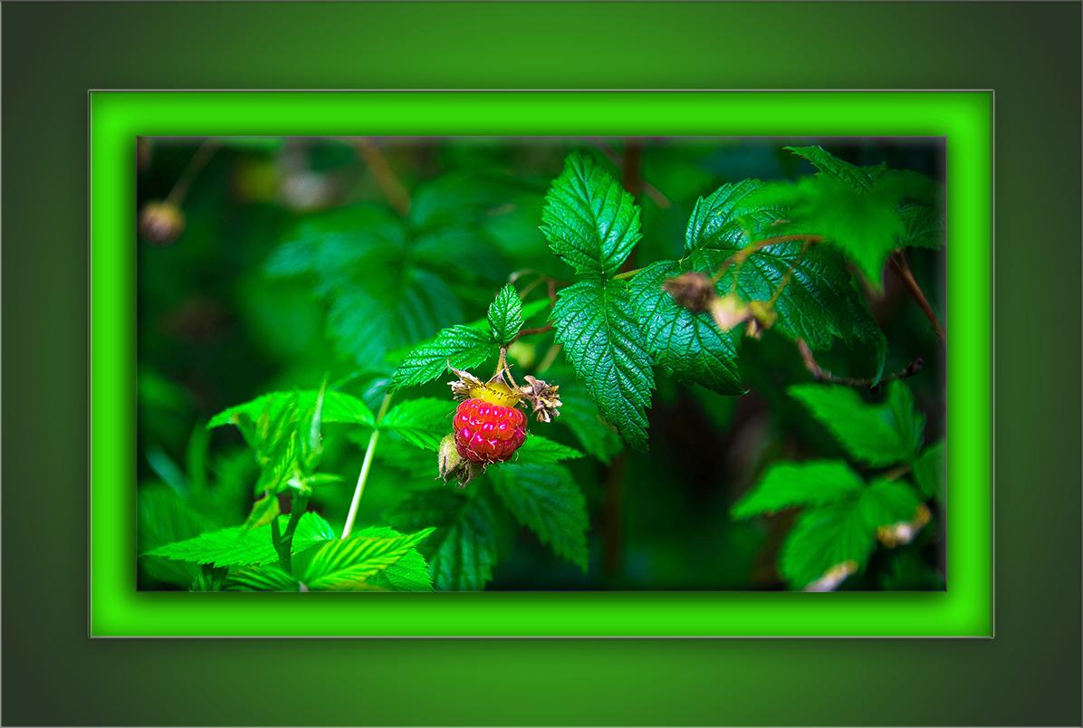 Wild Rasberry-72