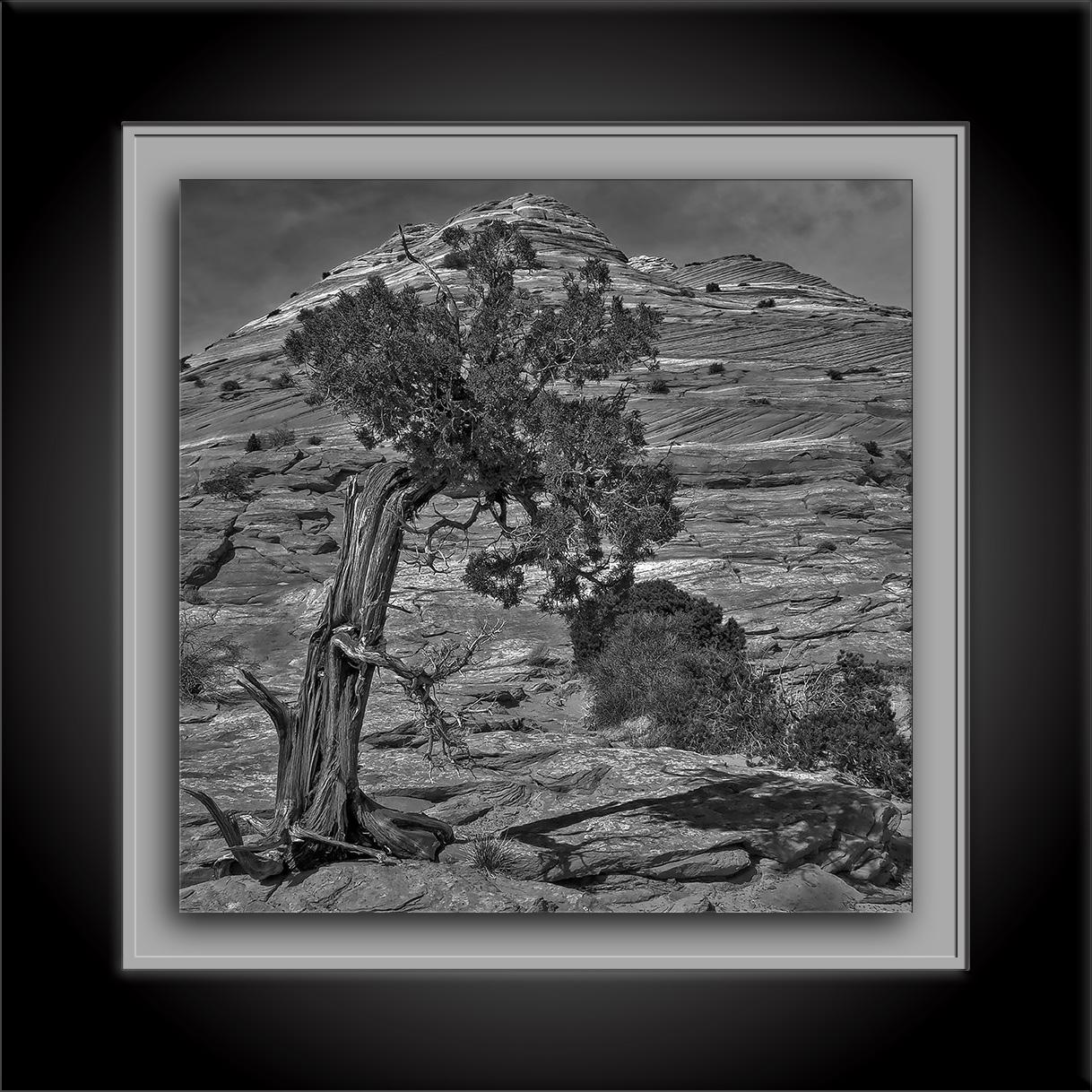 The Wave March Tree-2012-03-21-Edit-2-B&W-72