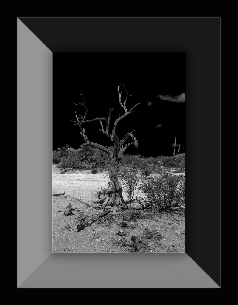 Dead Tree (1 of 1)-9 B-W blog
