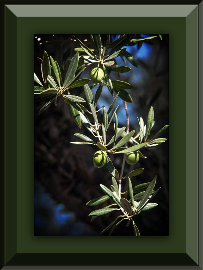 Olives (1 of 1) blog