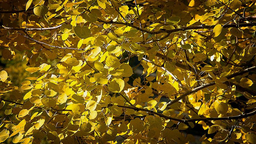Aspen Draw Fall Colors-8365 art blog