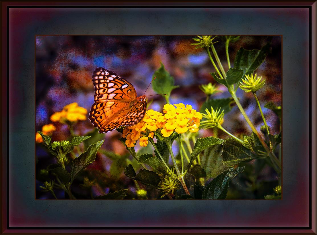 Fritillary Butterfly (1 of 1) Grunge Art blog