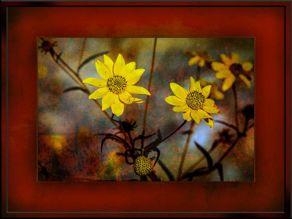 Wildflowers Goldeneye(1 of 1)Grunge Art blog 2
