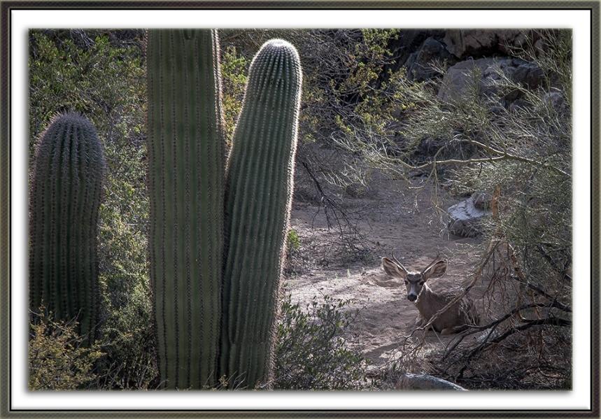 Wassen Peak (1 of 1)-13 Mule Deer blog framed