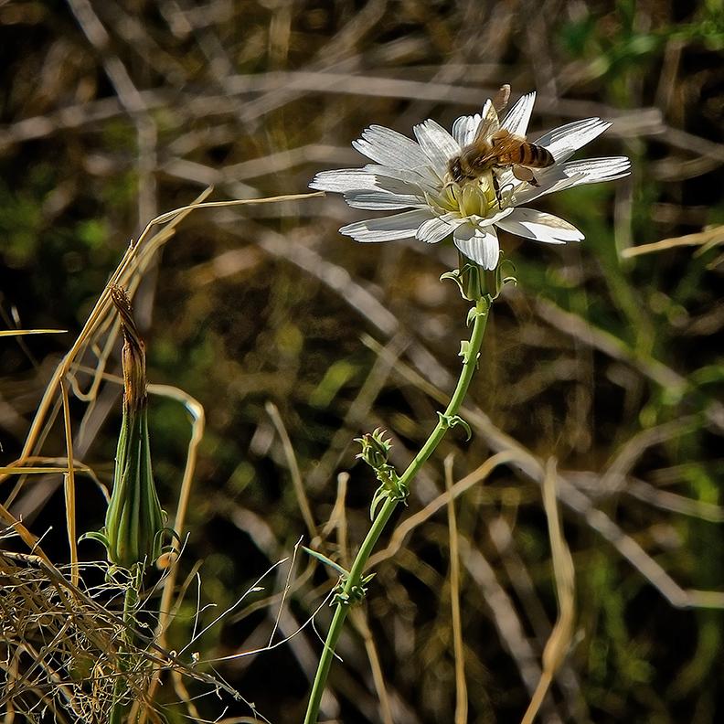 Esperero Trail Wildflowers Spring 2013